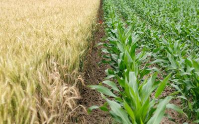 Ökologische vs. regenerative Landwirtschaft